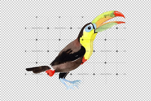 Tropical Bird Toucan Png Watercolor Set Digital