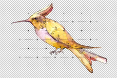 Tropical Colibri Birds Png Watercolor Set   Digital