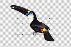 Tropical Toucan Png Watercolor Bird Set Digital