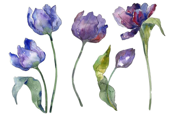 Tulips blue Watercolor png Flower