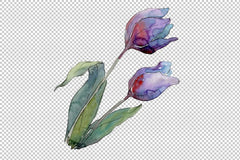 Tulips flower Watercolor png Flower