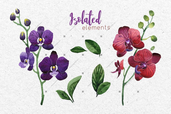 Two Orchids Png Aquarelle Set Digital