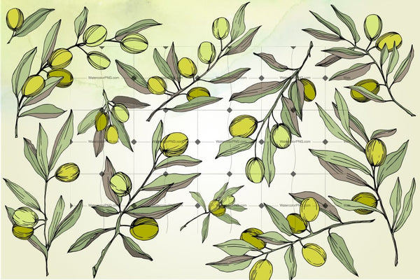 Vector 200 Files Of Olives Flower