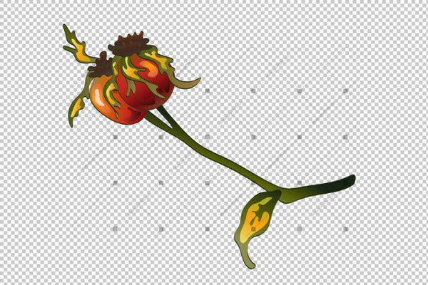 Vector Autumn Yellow Rose Hip Plant Png Set Flower