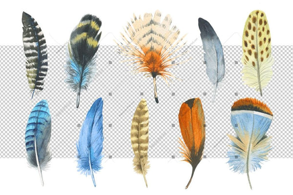 Watercolor Feather Png And Patterns Digital
