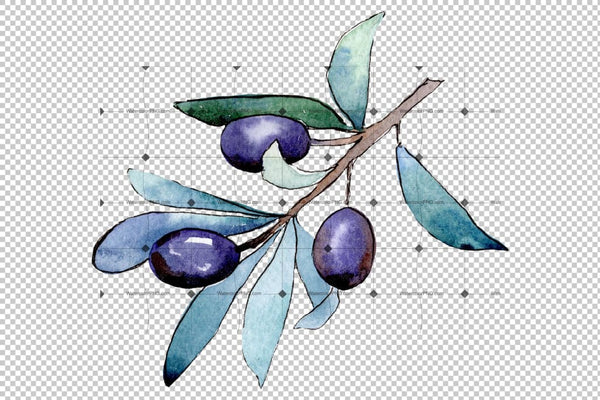 Watercolor Olives Png Set Digital