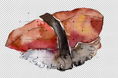 Watercolour Sushi Png Watercolour Set Digital