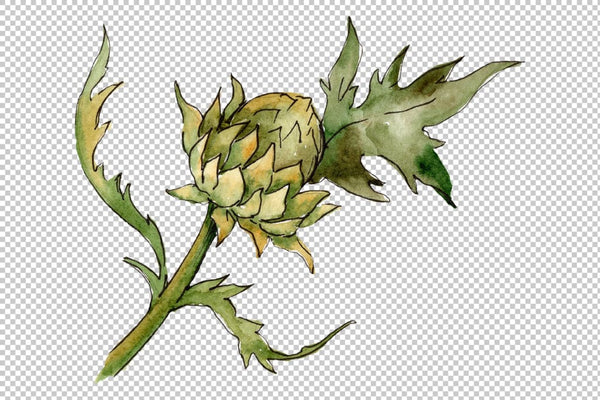 Watercolor thistle png Flower