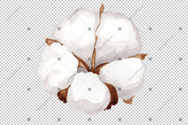 White Cotton Flowers Watercolor Png Flower