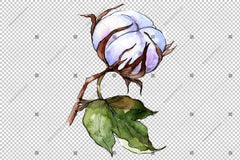 White Cotton Watercolor Flowers Png Flower
