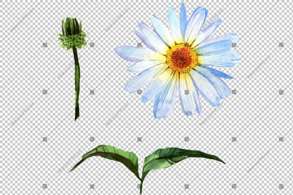 White Daisy Flowers Watercolor Png Flower