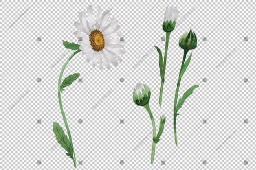 White Daisy Png Flowers Bunga Cat Air