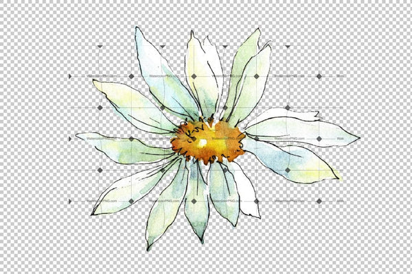 White Daisy Png Watercolor Flower Set Digital