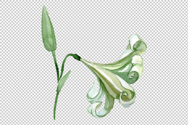 White lilies Watercolor png Flower