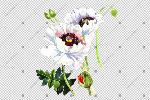 Poppy White Watercolour Flowers Png Flower