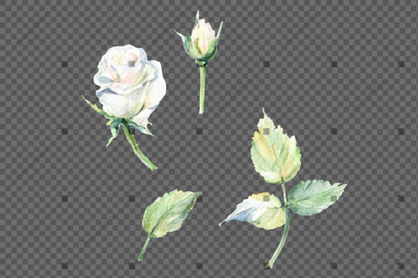 White Rose Watercolor Flowers Png Flower