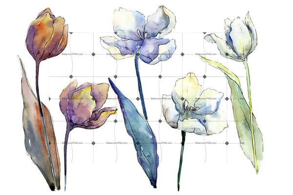 White Tulips Png Watercolor Flower Set Flower