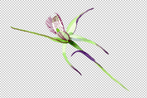 Wild orchid Watercolor png Flower