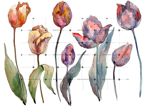 Wildflower Autumn Tulips Png Watercolor Set Flower