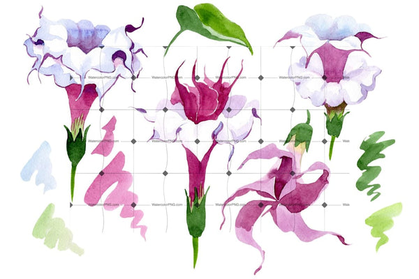 Wildflower Burgundy Brugmansia Png Watercolor Set Flower