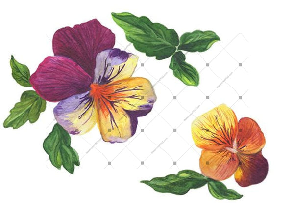 Wildflower Orange Viola Png Watercolor Set Flower