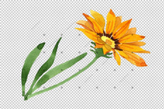 Wildflower Yellow Gazania Png Watercolor Set Flower