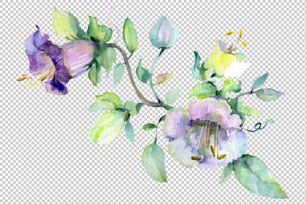 Wildflowers morning dawn watercolor png Flower