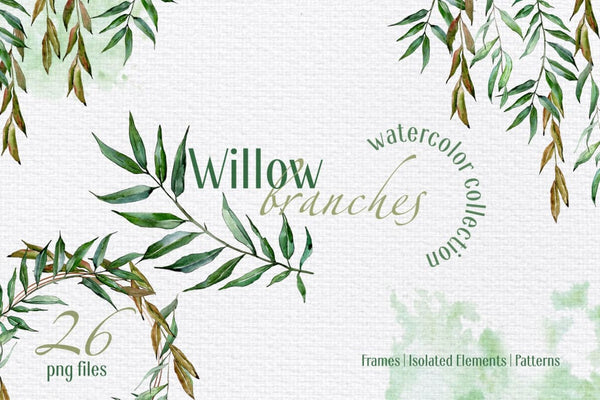 Willow branches Watercolor png Digital
