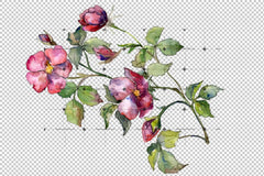 Wonderful Bloom Rose Png Watercolor Set Flower