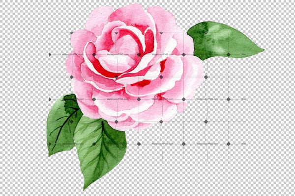 Wonderful Pink Camellia Png Watercolor Set Flower