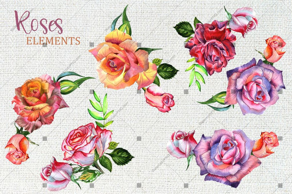 Wonderful Roses Png Watercolor Flower Set Digital