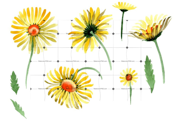 Yellow Chamomile Watercolor Png Flower