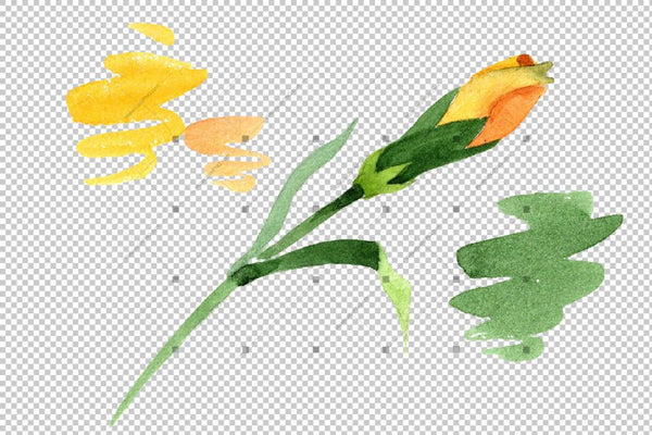 Yellow Dianthus Png Watercolor Flower Set Flower