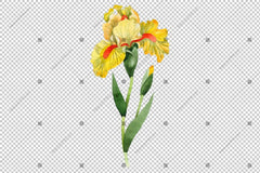 Yellow Irises Flowers Watercolor Png Flower