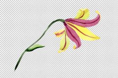 Yellow lily flower Watercolor png Flower