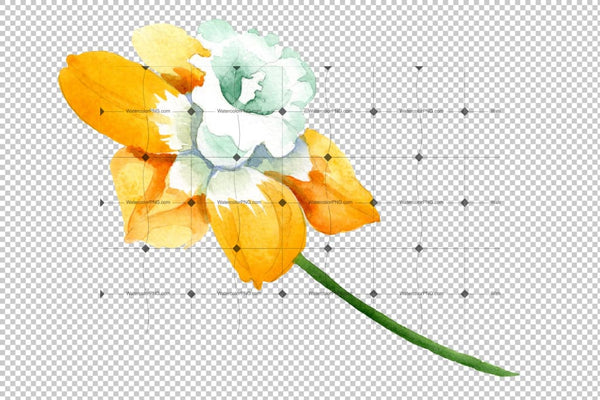 Yellow Narcissus Watercolor png Flower