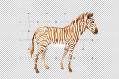 Zebra set Watercolor png Flower