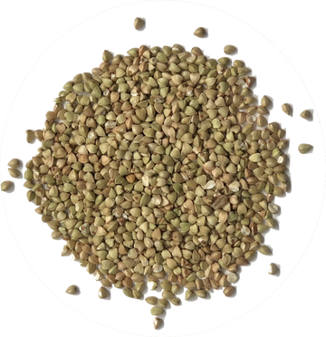 ORGANIC ACTIVATED BUCKWHEAT