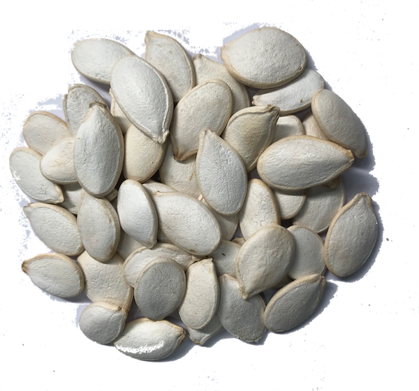 UNSALTED JUMBO PUMPKIN SEEDS IN SHELL