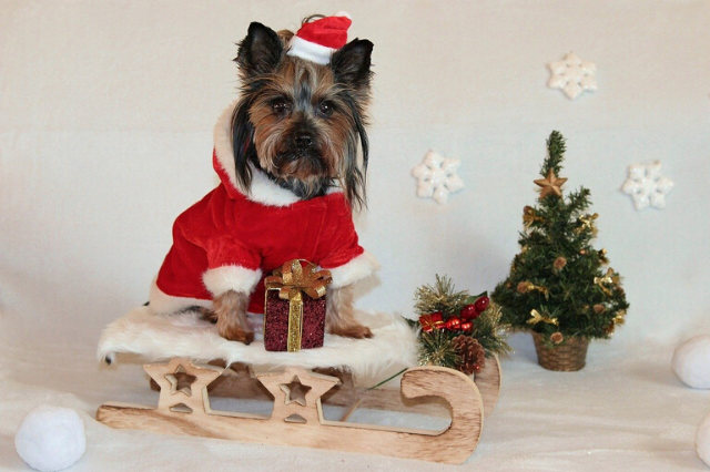 Holiday Safety for Dogs: 8 Tips for A Great December