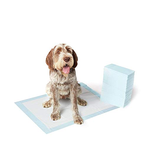 Dog and Puppy Potty Training Pads, X-Large (28 x 34 Inches) - Pack of 40