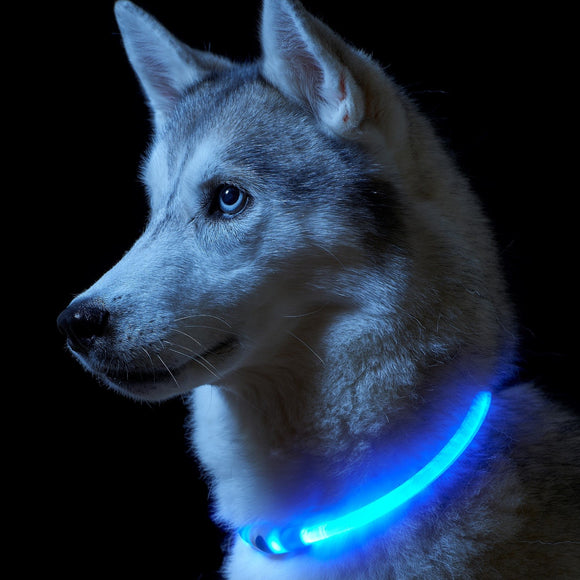 LED Dog Collar Flashing - savesummit.com