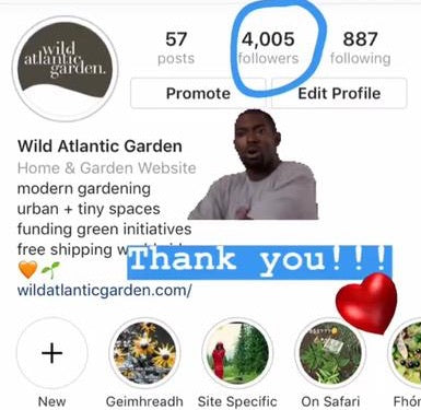 Wild Atlantic Garden Instagram Account Gardening Supplies Local Community