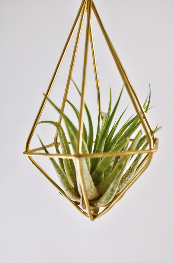 Wild Atlantic Garden Air Plants Hanging Garden Geometric Plant