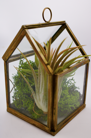 Wild Atlantic Garden Terrarium Air Plant Display Office Decor Plants Garden Supplies Ireland
