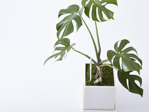 Indoor Plant AquaMetre