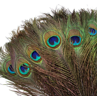 50 Pcs/Lot Natural Real Peacock Feathers For Crafts - Home & Hotel Decor - Wedding Decoration Plumes