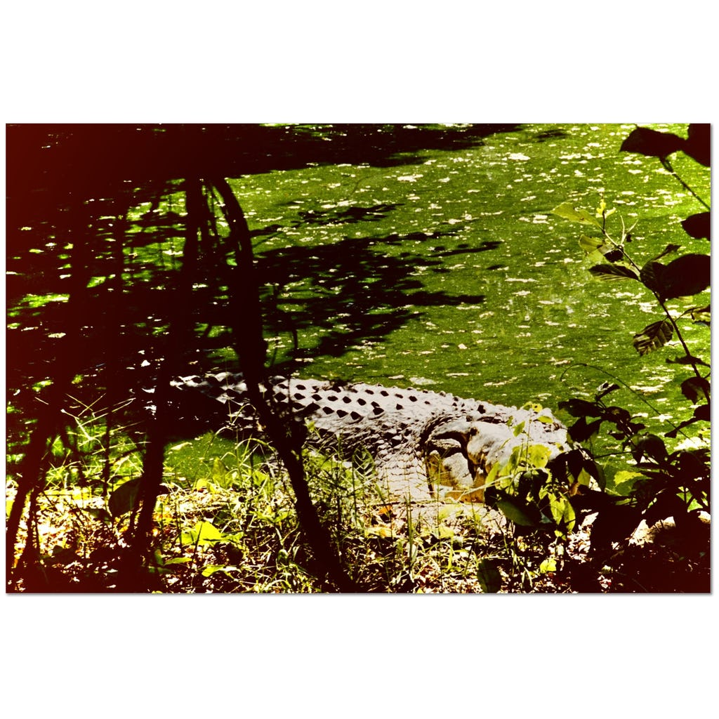 Crocodile Watches You - Gyclée Paper Print - Art Beauty Fashion