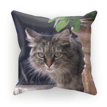Cat Cushion - Art Beauty Fashion