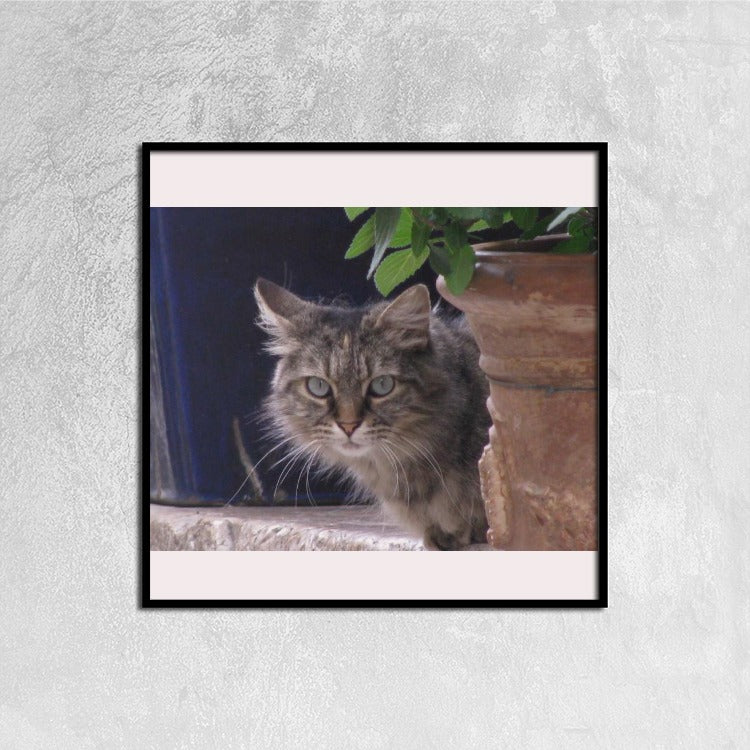 Cat Study Canvas Prints Wall Art for Home Decorations Stretched Black Square Frame Ready to Hang, 12ⅹ12 inch - Art Beauty Fashion